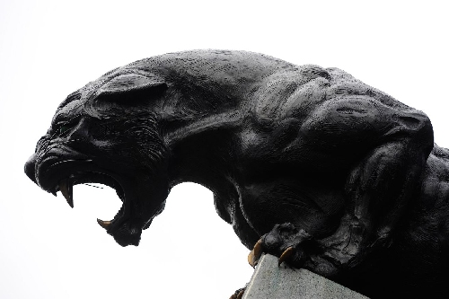 The Scratching Post: Carolina Panthers News 12/8/16