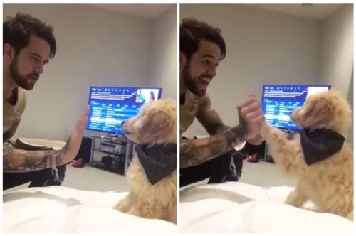 Watch Liverpool striker Danny Ings teach his Groodle pup to high five