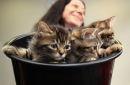 Quick Strikes: Have a basket of kittens, Bolts fans