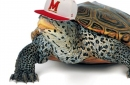 Better Know an Opponent: Maryland Terrapins