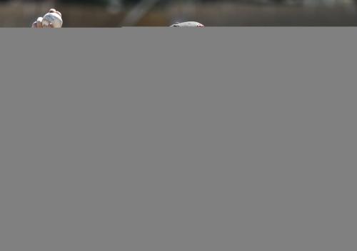 Diamondbacks' Shelby Miller goes 2 IP in spring debut
