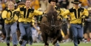 Arkansas mascot Tusk sends flowers after death of Colorado's Ralphie IV