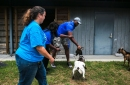 Calkins: Memphis Tigers help find homes for dogs, cats — and a goat