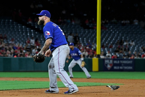 Rangers beat Angels 5-3, all thanks to that stupid Loser Pigeon