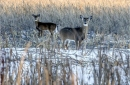 McHenry County Conservation District sites to close for fall, winter hunting