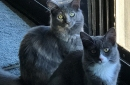 Meet Jenny and Penny, and adopt two beautiful cats at once