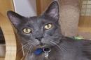 Adopt a Friend: Kitty Boy