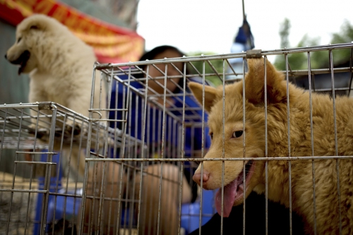China Dog Eating Festival