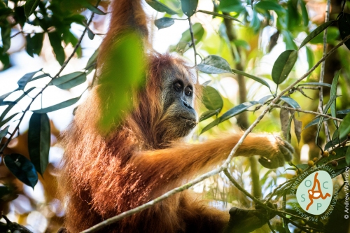 Top 10 new species list for 2018