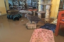 Marana animal shelter seeks donations, foster volunteers after monsoon flood