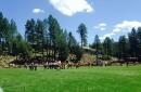 ASU Football: Sun Devils cancel annual trip up to Camp Tontozona