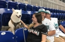 After a ruff start to the season, Marlins fans get a treat with Bark at the Park