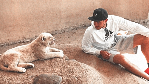 Clippers news: Danilo Gallinari appears to have angered lion cub in Africa trip