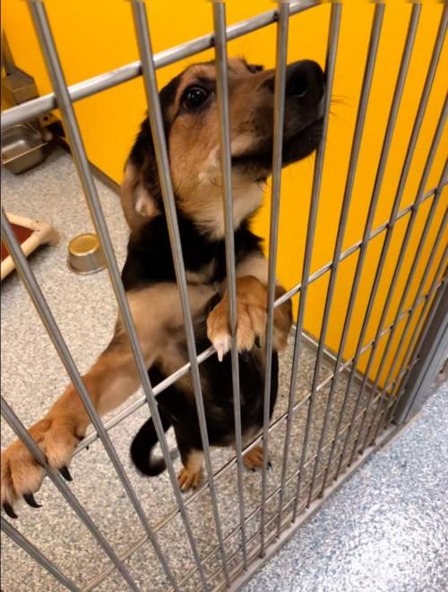 Dog needing foster home