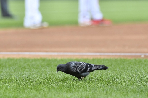 Final Score: Nationals 6, Mets 0—For the bird