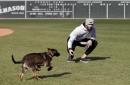 World Series Bark Park: Rick Porcello's puppy romps around Fenway