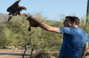 Falconers will bring their trained birds of prey to Tucson