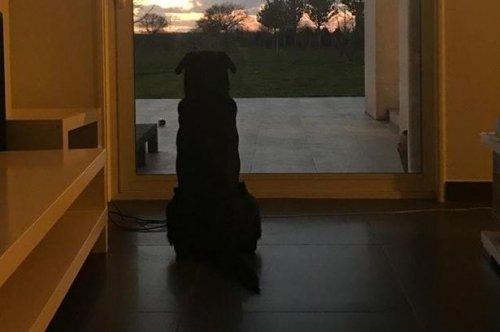 Emiliano Sala's dog heartbreakingly waits for Cardiff City star's return in sister's emotional tribute photo