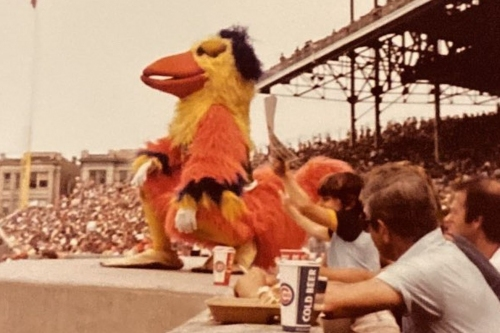 Cubs historical sleuthing: The Famous Chicken edition